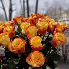 Роза эквадор желтая