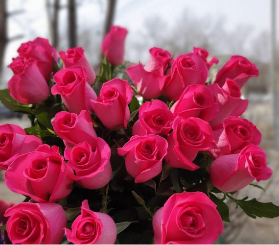 Роза эквадор розовая