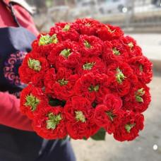 Ред Ай-пионовидная роза