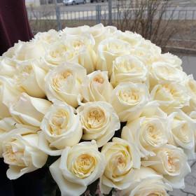 Пионовидная роза белая